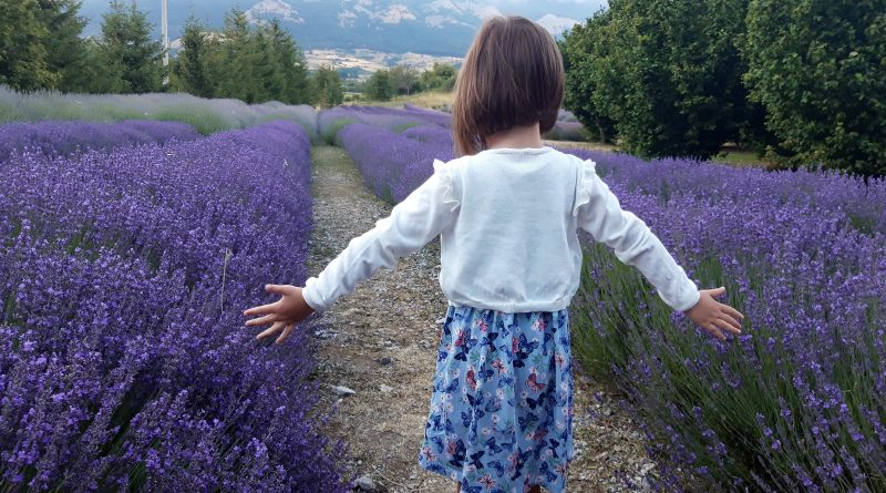Parco della lavanda, la magia viola del Pollino
